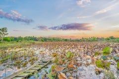 Lotus liście w jeziorze z łodzią Zdjęcia Royalty Free