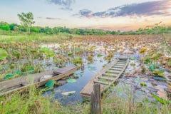 Lotus liście w jeziorze z łodzią Fotografia Royalty Free