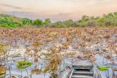 Lotus liście w jeziorze z łodzią Zdjęcie Royalty Free