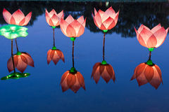 Lotus light in pond Royalty Free Stock Photography