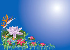Lotus and lilly. Lotus and colourful Lilly, water grass in blue background illustration Stock Photo