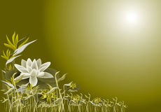 Lotus and lilly Stock Images