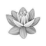 Lotus Lily Water Fotografía de archivo libre de regalías