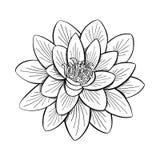 Lotus Lily Water Imágenes de archivo libres de regalías