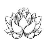 Lotus Lily Water Fotos de archivo