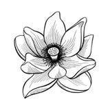 Lotus Lily Water royalty-vrije illustratie