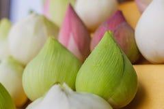 Lotus Lily Water Immagini Stock Libere da Diritti