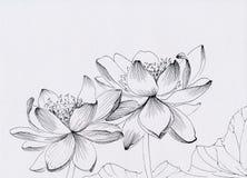 Lotus linje konstillustration vektor illustrationer