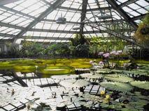 Lotus, lirio de agua con descenso del agua en libra fotos de archivo