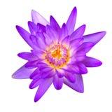 Lotus lokalisierte Lizenzfreie Stockfotografie
