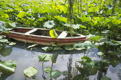 Lotus with long tail boat Royalty Free Stock Photo