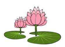 Lotus love Royalty Free Stock Image