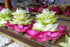 Lotus lub Nelumbo nucifera Zdjęcie Royalty Free