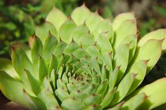 Lotus Mandala Petals royalty free stock photos