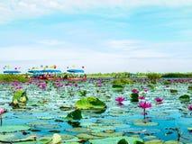 Lotus-Meer und -boot stockfoto