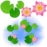 Lotus met bladeren Royalty-vrije Stock Foto