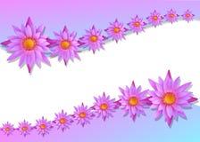 Lotus mit Weißbuchhintergrund Lizenzfreies Stockbild