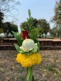 Lotus nam goudsbloem betaalt hulde toe stock foto's