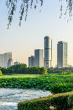 Lotus and Nanjin city Royalty Free Stock Image