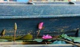 Lotus neben einem hölzernen Boot Stockbild