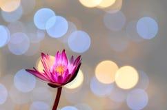 Lotus nel bokeh del fondo Immagine Stock