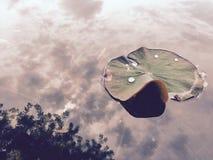 Lotus nel cielo Fotografia Stock Libera da Diritti