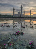 Lotus och soluppgång Arkivbilder