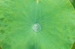 Lotus ou nénuphar ; baisse de l'eau sur la feuille de lotus Photos libres de droits