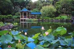 Lotus på Fanling Hong Lok Park arkivbild