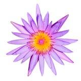 Lotus púrpura Foto de archivo