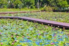 Lotus-Park Lizenzfreie Stockfotografie