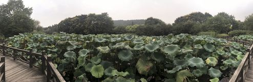 Lotus Park Lake Hangzhou 05 stock photography