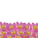 Lotus Pattern Imagenes de archivo