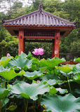 The lotus Pavilion. A lotus and a lot of lotus leaf stand on a red Pavilion Royalty Free Stock Image