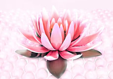 Lotus and pearls. Royalty Free Stock Photo