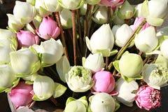 Lotus per il buddista Fotografie Stock
