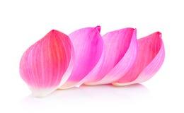 Lotus petal. On white background Royalty Free Stock Photography