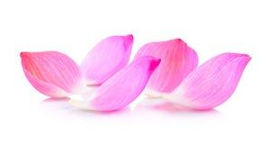 Lotus petal Royalty Free Stock Photos