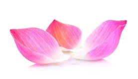 Lotus petal Royalty Free Stock Photography