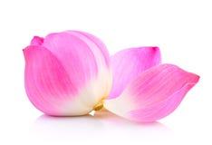 Lotus petal Stock Photography