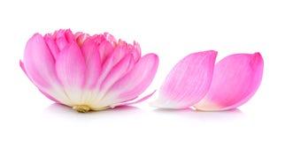 Lotus petal Stock Image