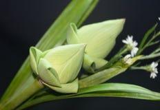 Lotus petals fold Stock Photography