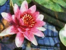 Lotus Royalty Free Stock Image