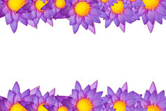 Lotus picture frame. In white background Stock Photography