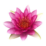 Lotus 85. The pink lotus isolated on white background Stock Photo