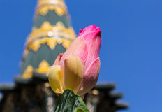 Lotus. Pink lotus in the temple. With a background as a pagoda Stock Photo