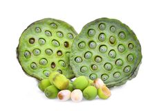 Lotus pods and seeds isolated on white Royalty Free Stock Photos