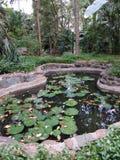 Lotus Pond immagine stock libera da diritti