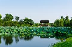 Lotus pond. Hangzhou xixi wetland landscape of the lotus pond Stock Images