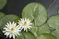 Lotus Pond Fotos de archivo